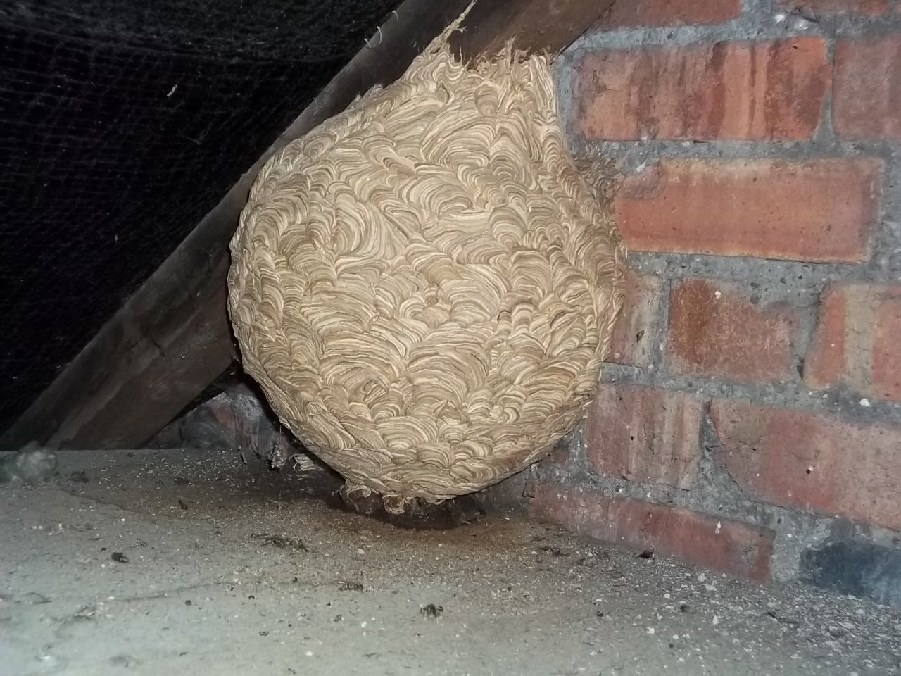 Wasp Nests. Lots of wasps means a high risk of being stung ...